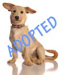 Dudley is Adopted